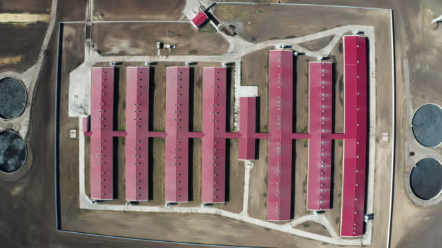 aerial view of a large pig farm on an agricultural field in spring - ukraine stock videos & royalty-free footage