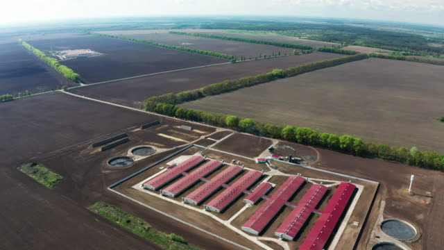 aerial view of a large pig farm on an agricultural field in spring - pig stock videos & royalty-free footage