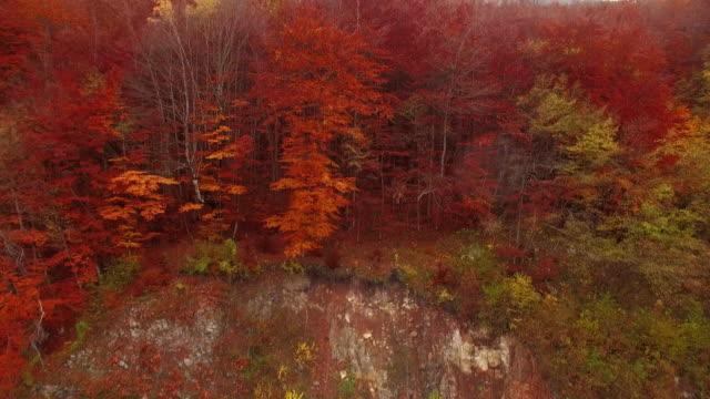 地方の道路と 4 k の森の空撮 - カエデ点の映像素材/bロール