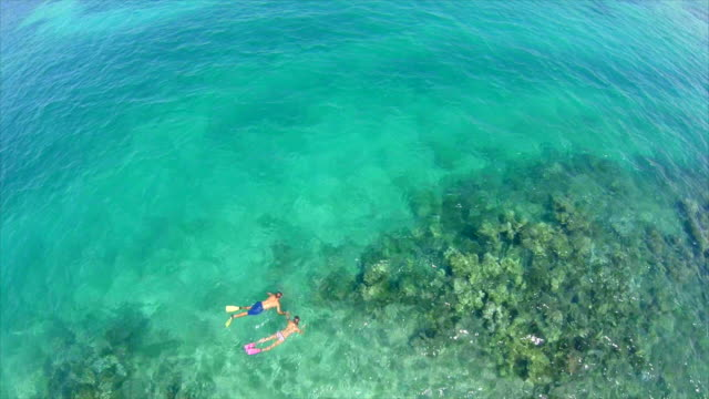 aerial view of a man and woman couple snorkeling over a coral reef of a tropical island. - fiji stock videos & royalty-free footage