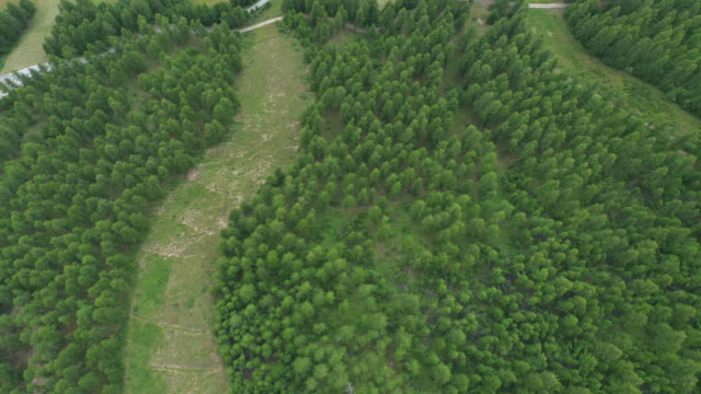 vidéos et rushes de aerial view of a meleze forest, with grass fields in the mountains - prairie