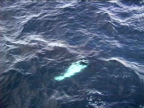 aerial view of a pair of whales - artbeats video stock e b–roll