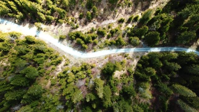 Luftaufnahme von einem Pinienwald in der Schweiz