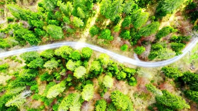 スイス連邦共和国の松林の航空写真