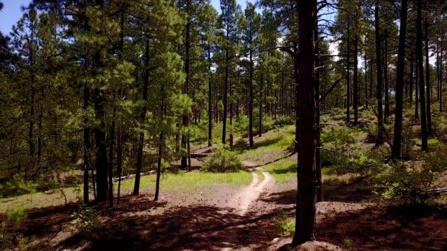aerial view of a pine tree forest in prescott arizona - prescott arizona stock videos & royalty-free footage