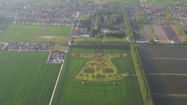 aerial view of a rapeseed flower field painting featuring an imperial dragon robe at a village on april 6 2019 in nanjing jiangsu province of china - nanjing stock videos & royalty-free footage