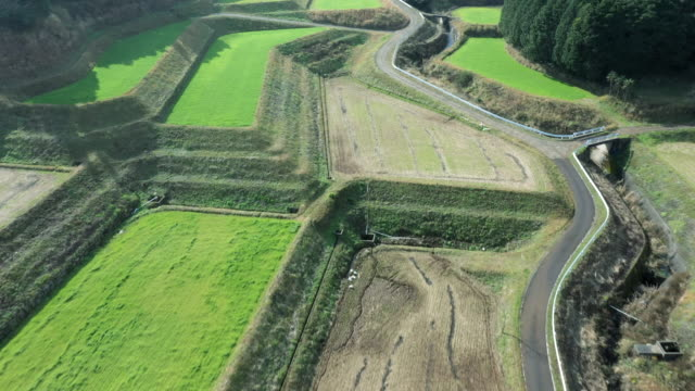aerial view of a road running between a forest and paddy field - helicopter point of view stock videos & royalty-free footage