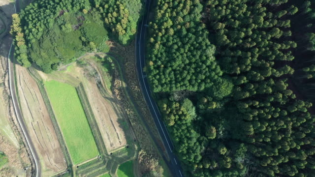 vídeos y material grabado en eventos de stock de aerial view of a road running between a forest and paddy field - escena no urbana
