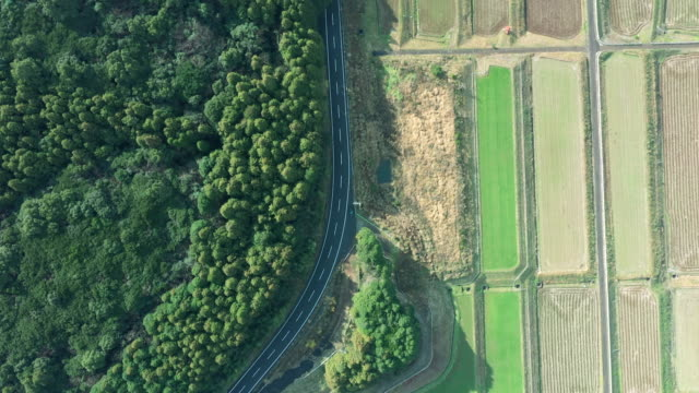 aerial view of a road running between a forest and paddy field - non urban scene stock videos & royalty-free footage