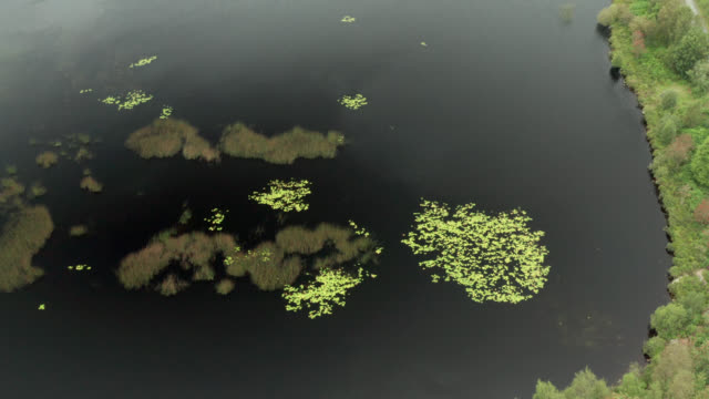aerial view of a scottish loch in dumfries and galloway - water plant stock videos & royalty-free footage