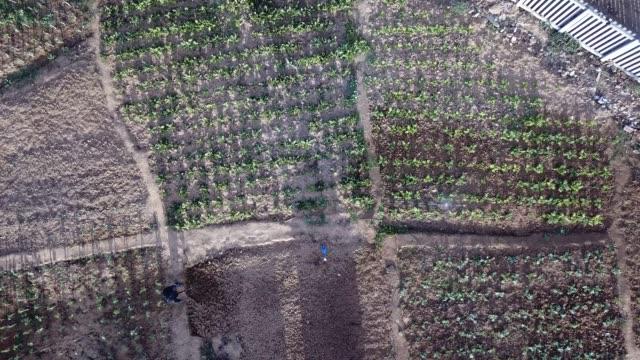 stockvideo's en b-roll-footage met luchtfoto van een senior man werken in de moestuin van zijn gemeenschap - verantwoordelijkheid