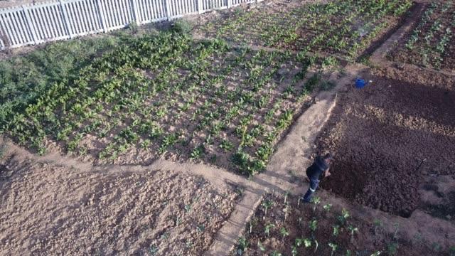Luftaufnahme von einem senior Mann arbeitet in seinem Gemüsegarten Gemeinschaft