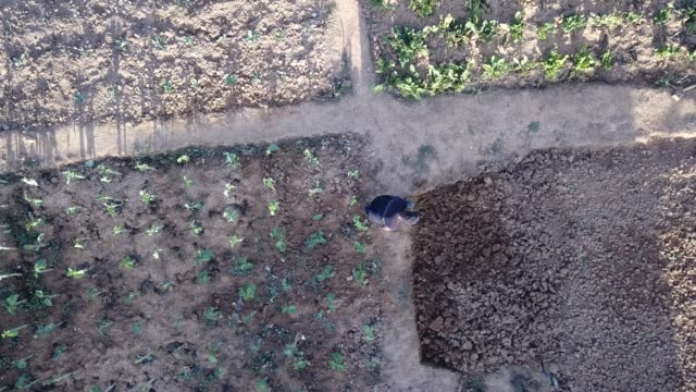 aerial view of a senior male working in his community vegetable garden - orticoltura video stock e b–roll
