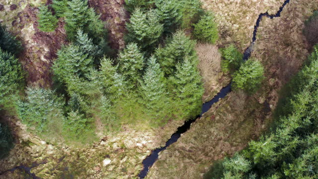 aerial view of a small river in scottish forest - galloway scotland stock videos & royalty-free footage