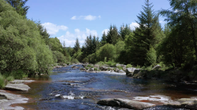 aerial view of a small scottish river in a forest - river stock videos & royalty-free footage