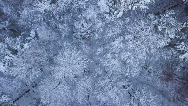 Luchtfoto van een boslandschap met sneeuw