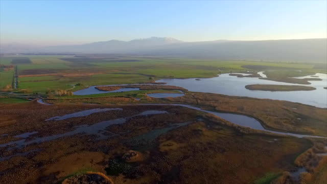 aerial view of  a tractor spreading corn grain to feed a large flock of eurasian cranes (grus grus) in the hula valley - クロヅル点の映像素材/bロール