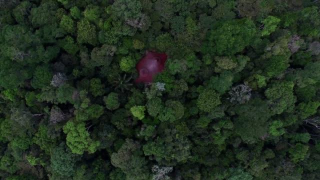 vídeos de stock, filmes e b-roll de vista aérea de uma floresta tropical - floresta tropical