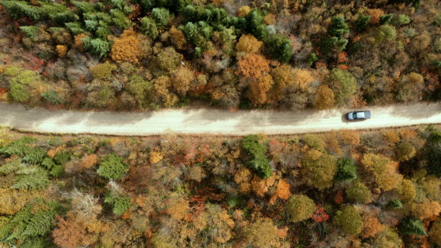 vídeos de stock e filmes b-roll de aerial view of a vehicle on road leading trough beautiful colorful autumn forest in sunny fall - asfalto