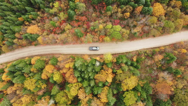 vídeos de stock e filmes b-roll de aerial view of a vehicle on road leading trough beautiful colorful autumn forest in sunny fall - vista aérea