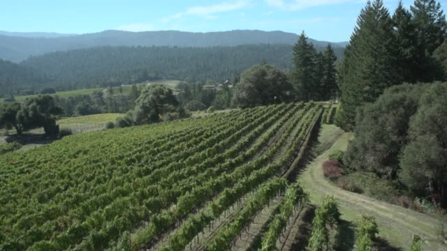 aerial view of a vineyard - napa california video stock e b–roll