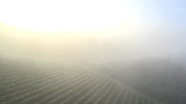 Aerial View of a Vineyard