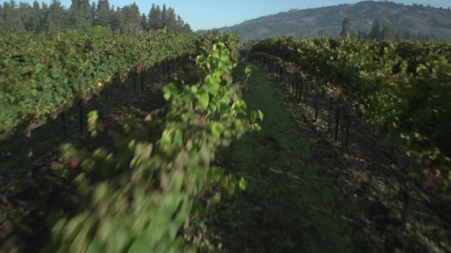 aerial view of a vineyard - grape stock videos & royalty-free footage