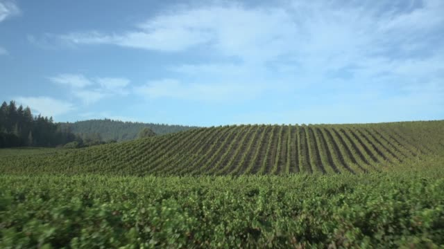 aerial view of a vineyard - collina video stock e b–roll