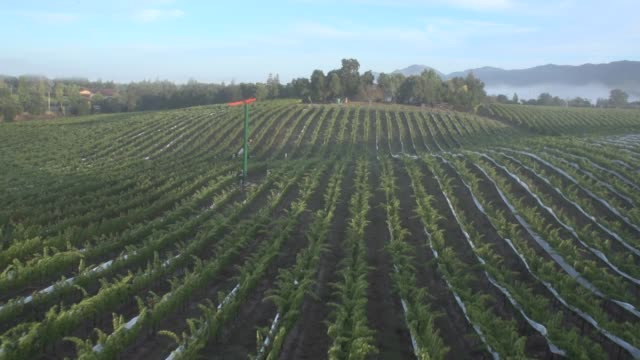 aerial view of a vineyard - paesaggi video stock e b–roll