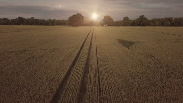 vídeos de stock e filmes b-roll de aerial view of a wheat field - indústria de comidas e bebidas