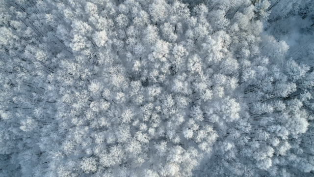 Aerial view of a winter forest with frosty trees