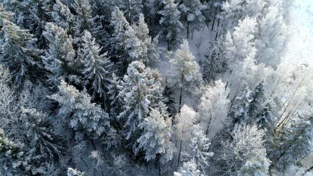 aerial view of a winter forest with frosty trees - wood material stock videos & royalty-free footage