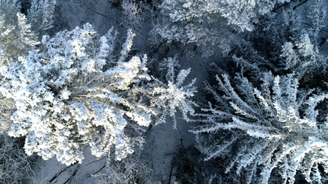 aerial view of a winter forest with frosty trees - north stock videos & royalty-free footage