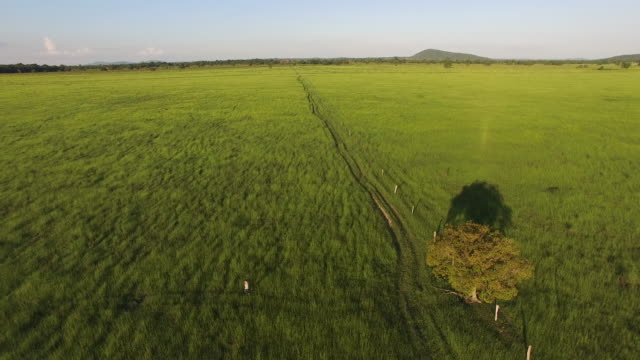 aerial view of a woman walking on a green pasture - cerrado stock videos & royalty-free footage