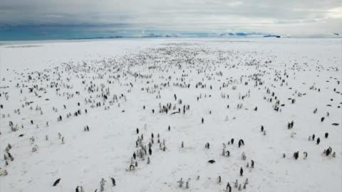 vídeos y material grabado en eventos de stock de aerial view of adelie penguins in antarctica - antarctica