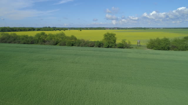 stockvideo's en b-roll-footage met aerial view of agricultural landscape in brandenburg - weide