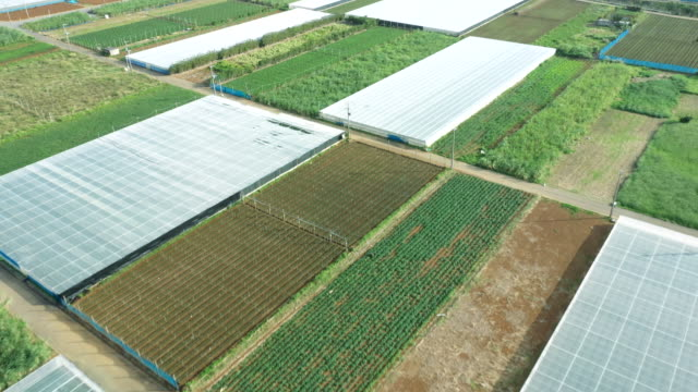 aerial view of agriculture field - 里山点の映像素材/bロール