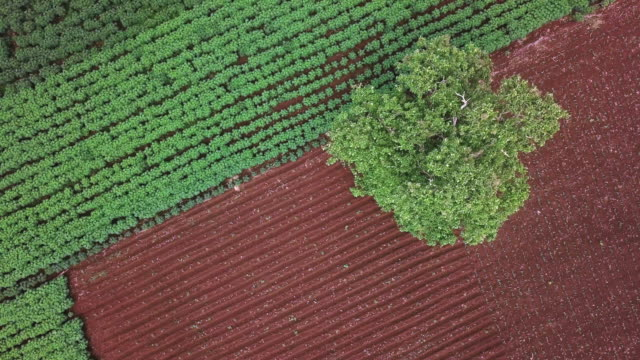 Aerial view of agriculture field,bio fuels refinery plant,BIO-ETHANOL by Cassava