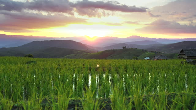 aerial view of agriculture in rice at sunset - satoyama scenery stock videos & royalty-free footage