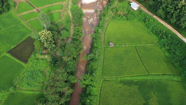 vídeos de stock, filmes e b-roll de vista aérea da agricultura em campos de arroz para cultivo. fundo da natureza. - artigo de vestuário para cabeça