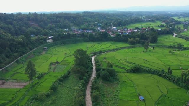 vídeos y material grabado en eventos de stock de vista aérea de la agricultura en los campos de arroz para el cultivo. antecedentes de la naturaleza. - oficio agrícola