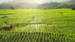 Aerial view of agriculture in rice terrace