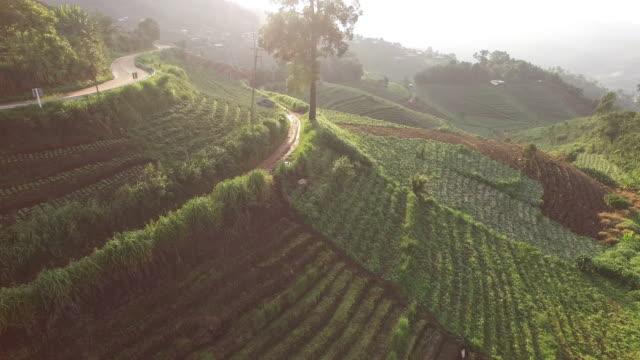 Veduta aerea di agricoltura di montagna