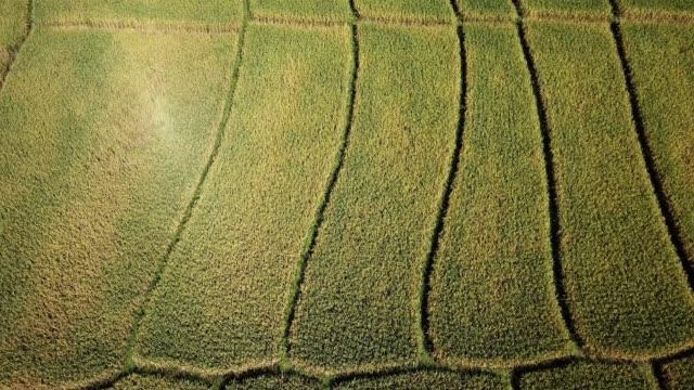 ベトナム農業コンセプト映像の農学と田んぼの空撮 - 畑点の映像素材/bロール