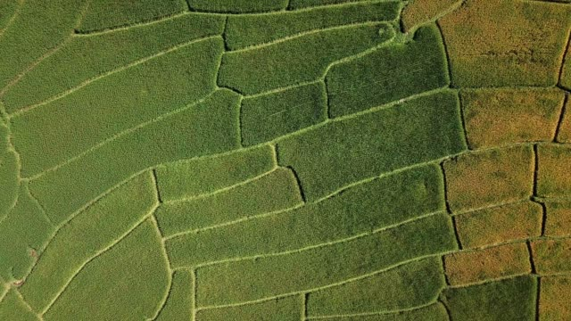 aerial view of agricuture and rice field of vietnam , agriculture concept footage - sa pa stock videos and b-roll footage