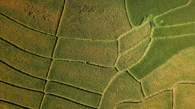 aerial view of agricuture and rice field of vietnam , agriculture concept footage - rice paddy stock videos and b-roll footage