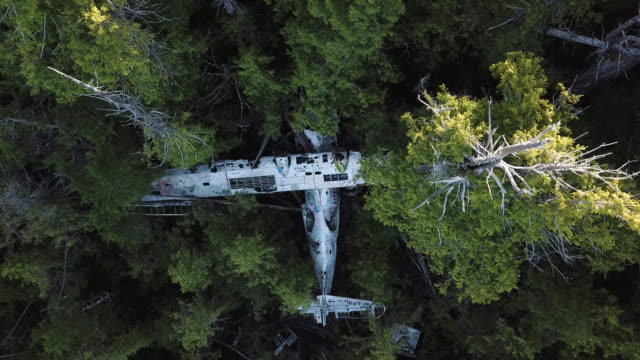 aerial view of airplane wreck in forest, british columbia, canada - 航空事故点の映像素材/bロール