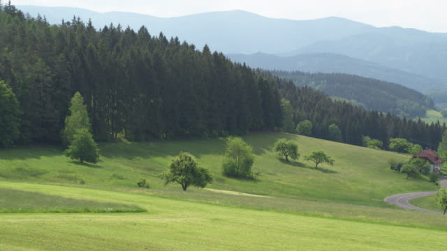aerial view of alpine forest and pasture - pasture stock videos & royalty-free footage