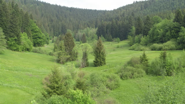 Aerial view of alpine forest and pasture