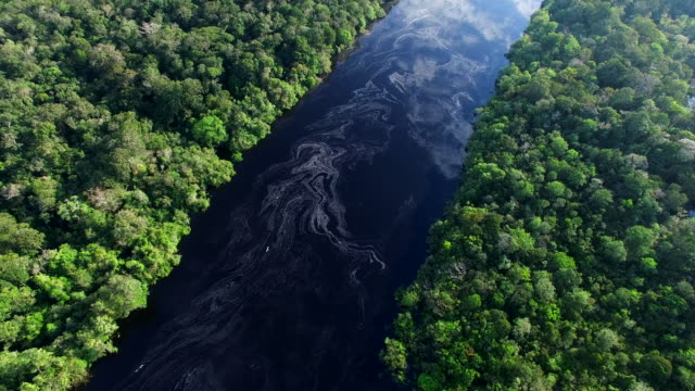 aerial view of amazon rainforest in brazil - belém brazil stock videos and b-roll footage